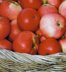 Apples will feature in many of Suzanne's recipes